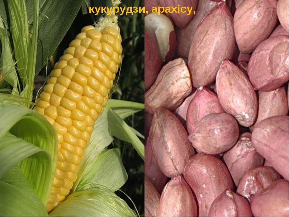 кукурудзи, арахiсу,