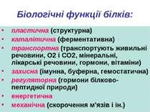 Біологічні функції білків: пластична (структурна) каталітична (ферментативна)...