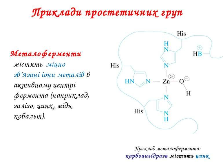 Приклади простетичних груп Металоферменти містять міцно зв'язані іони металів...
