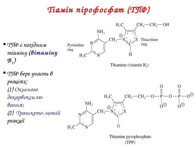Тіамін пірофосфат (ТПФ) ТПФ є похідним тіаміну (вітаміну B1) ТПФ бере участь ...