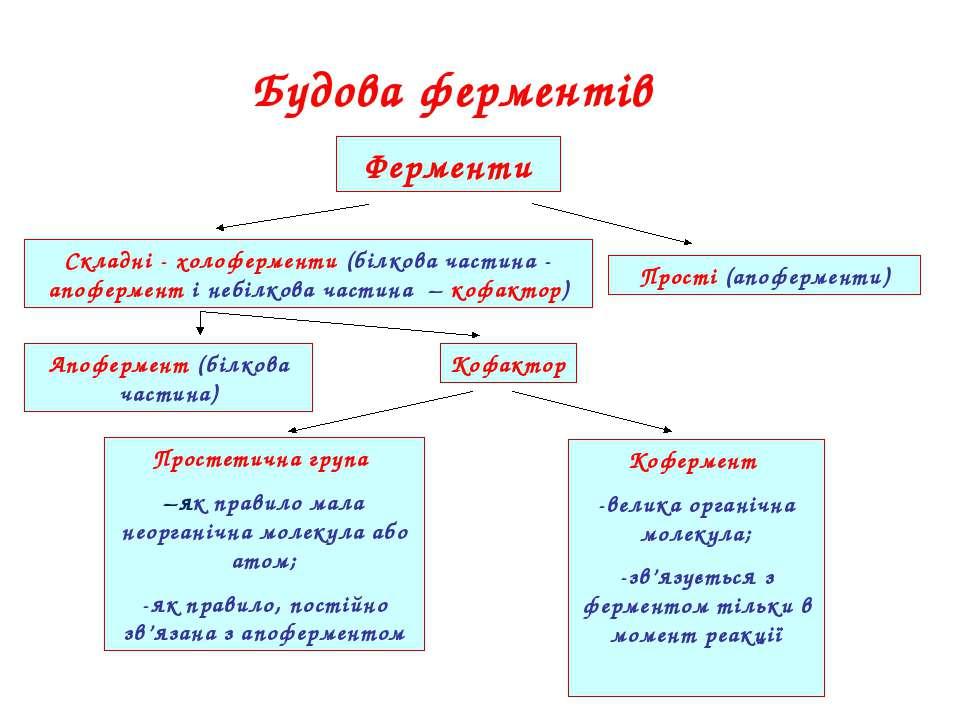 Будова ферментів Ферменти Складні - холоферменти (білкова частина - апофермен...