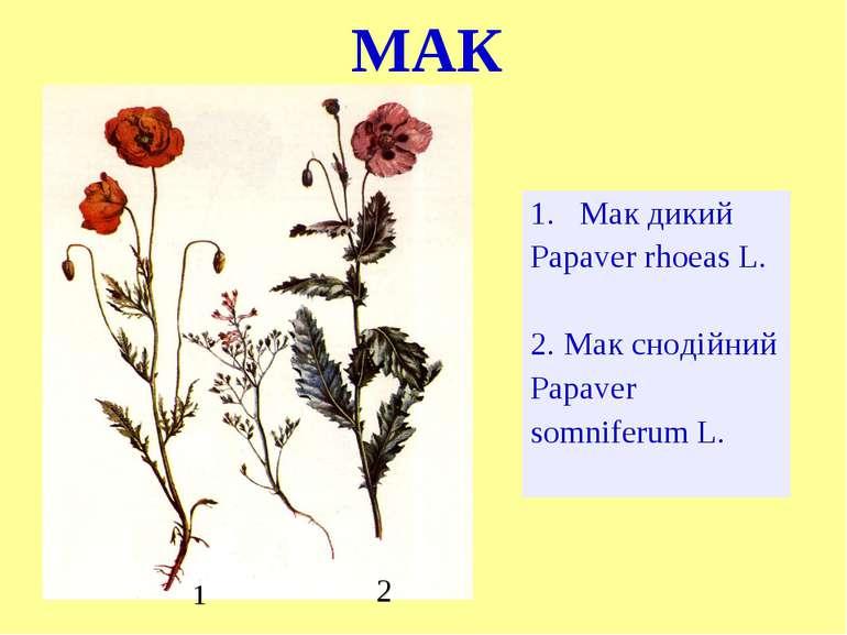 МАК Мак дикий Papaver rhoeas L. 2. Мак снодійний Papaver somniferum L. 2 1