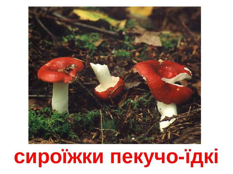 сироїжки пекучо-їдкі