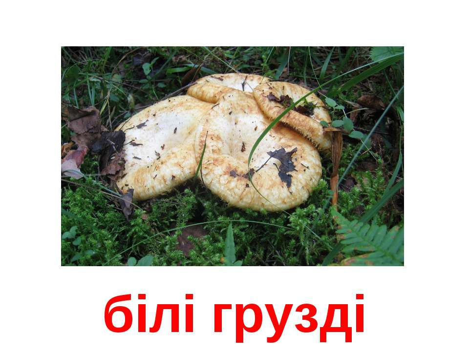білі грузді