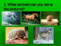 1. What animals can you see at the pictures? a dolphin a hedgehog a rabbit a ...