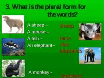 3. What is the plural form for the words? A sheep – A mouse – A fish – An ele...