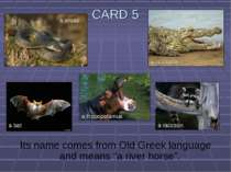 "CARD 5 Its name comes from Old Greek language and means ""a river horse"". a sn..."