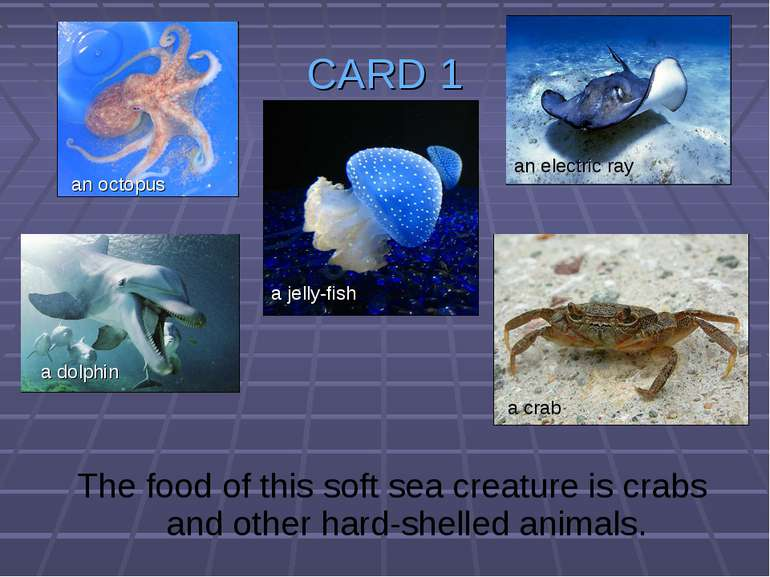 CARD 1 The food of this soft sea creature is crabs and other hard-shelled ani...