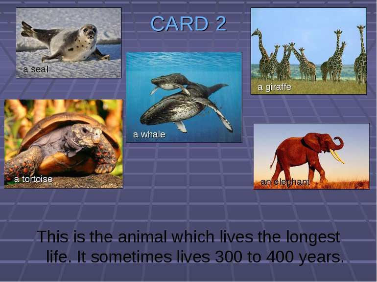 CARD 2 This is the animal which lives the longest life. It sometimes lives 30...