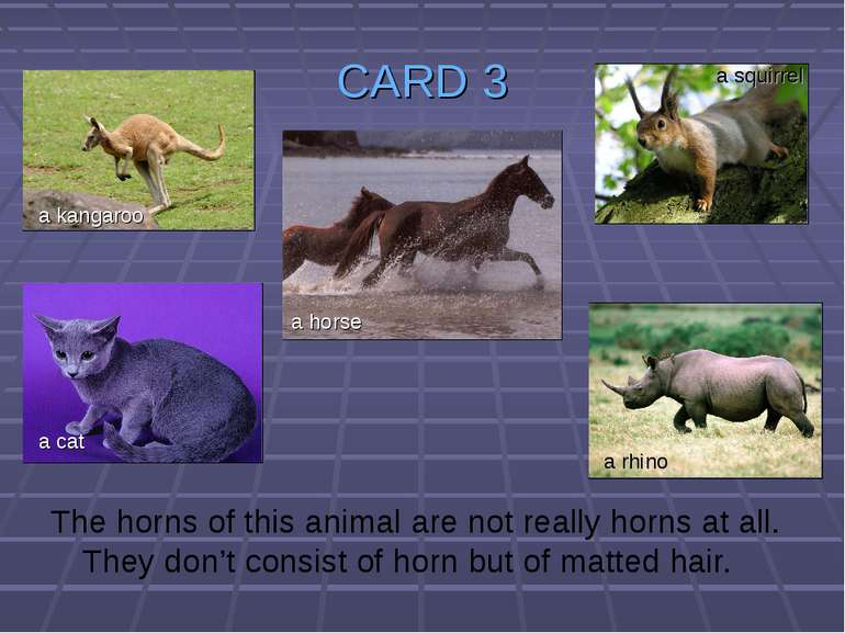 CARD 3 The horns of this animal are not really horns at all. They don't consi...