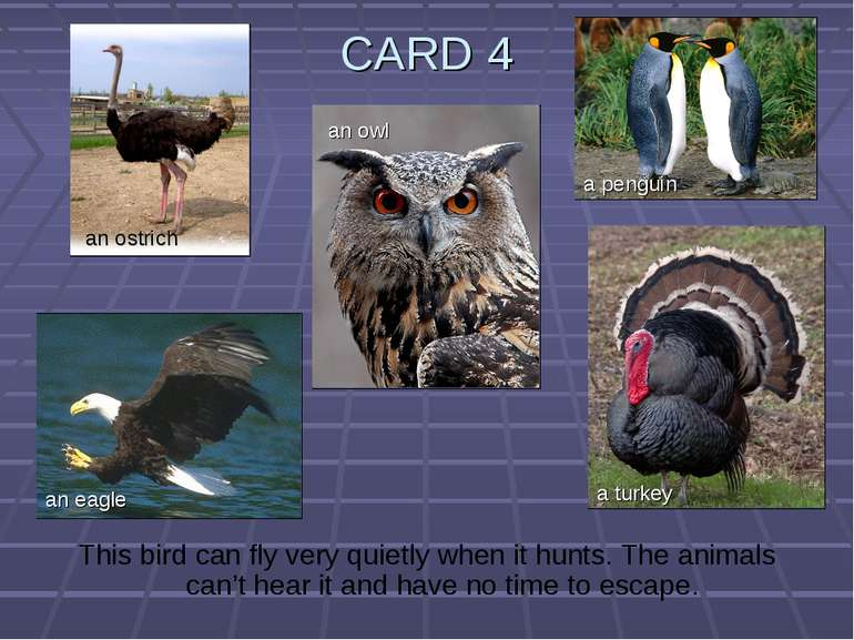 CARD 4 This bird can fly very quietly when it hunts. The animals can't hear i...