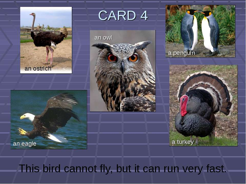 CARD 4 This bird cannot fly, but it can run very fast. an ostrich an owl an e...