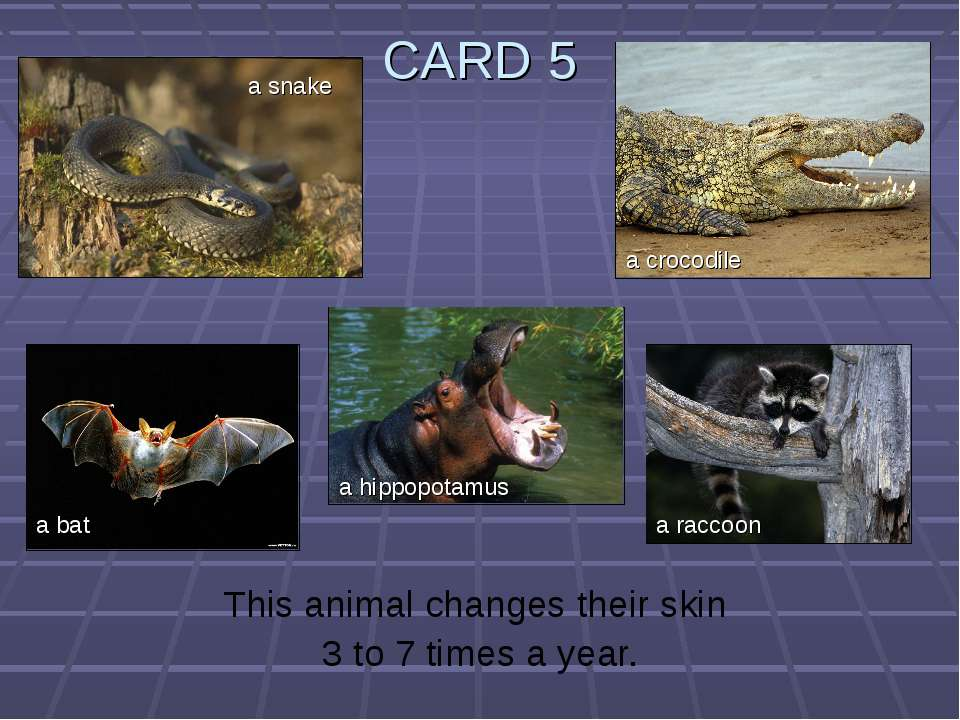 CARD 5 This animal changes their skin 3 to 7 times a year. a snake a bat a hi...