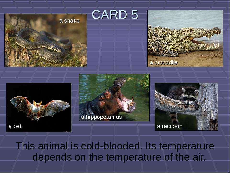 CARD 5 This animal is cold-blooded. Its temperature depends on the temperatur...