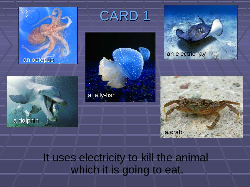 CARD 1 It uses electricity to kill the animal which it is going to eat. a jel...