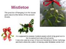 Mistletoe The practice of hanging it in the house goes back to the times of t...