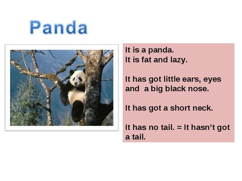 Это панда. Она толстая и ленивая. Она имеет маленькие черные ушки, глаза и но...