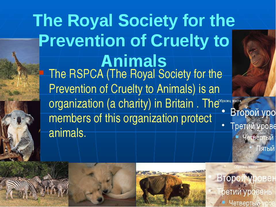 essay on cruelty to animals Cruelty to animals essay - find main recommendations as to how to receive the best term paper ever get the needed report here and forget about your fears let us help with your essay or dissertation.