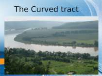 The Curved tract