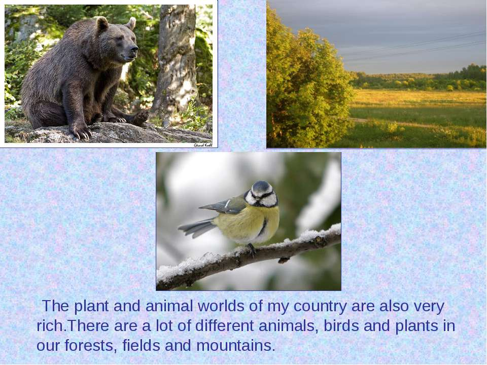 The plant and animal worlds of my country are also very rich.There are a lot ...