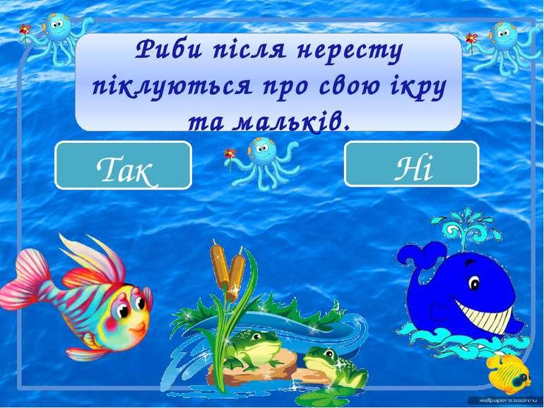Ні Так Риби після нересту піклуються про свою ікру та мальків.