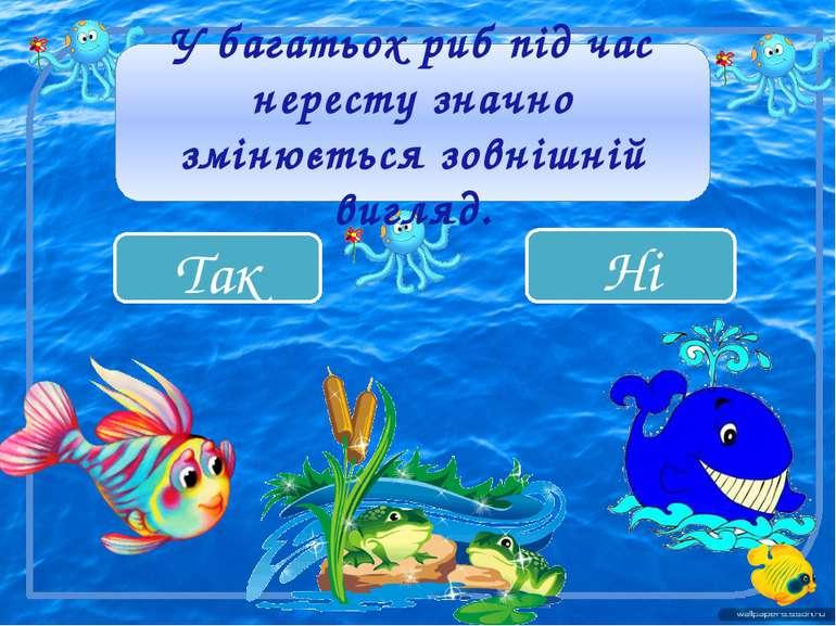 Так Ні У багатьох риб під час нересту значно змінюється зовнішній вигляд.
