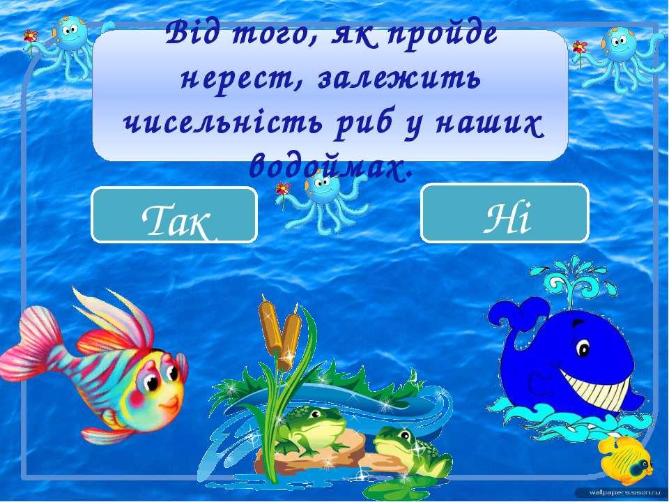 Так Ні Від того, як пройде нерест, залежить чисельність риб у наших водоймах.