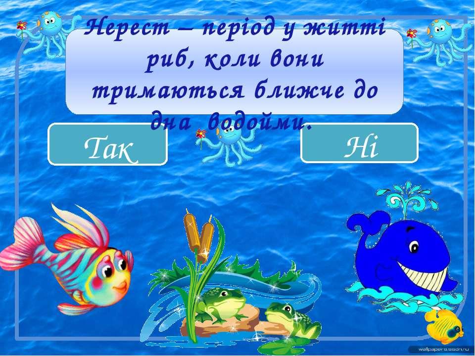 Ні Так Нерест – період у житті риб, коли вони тримаються ближче до дна водойми.