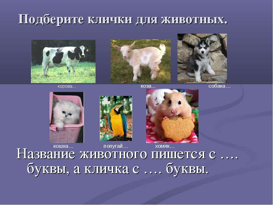 Подберите клички для животных. Название животного пишется с …. буквы, а кличк...