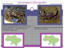 Десятиногі (Decapoda) Концентрується вздовж берега на глибині до 3 м, де прох...