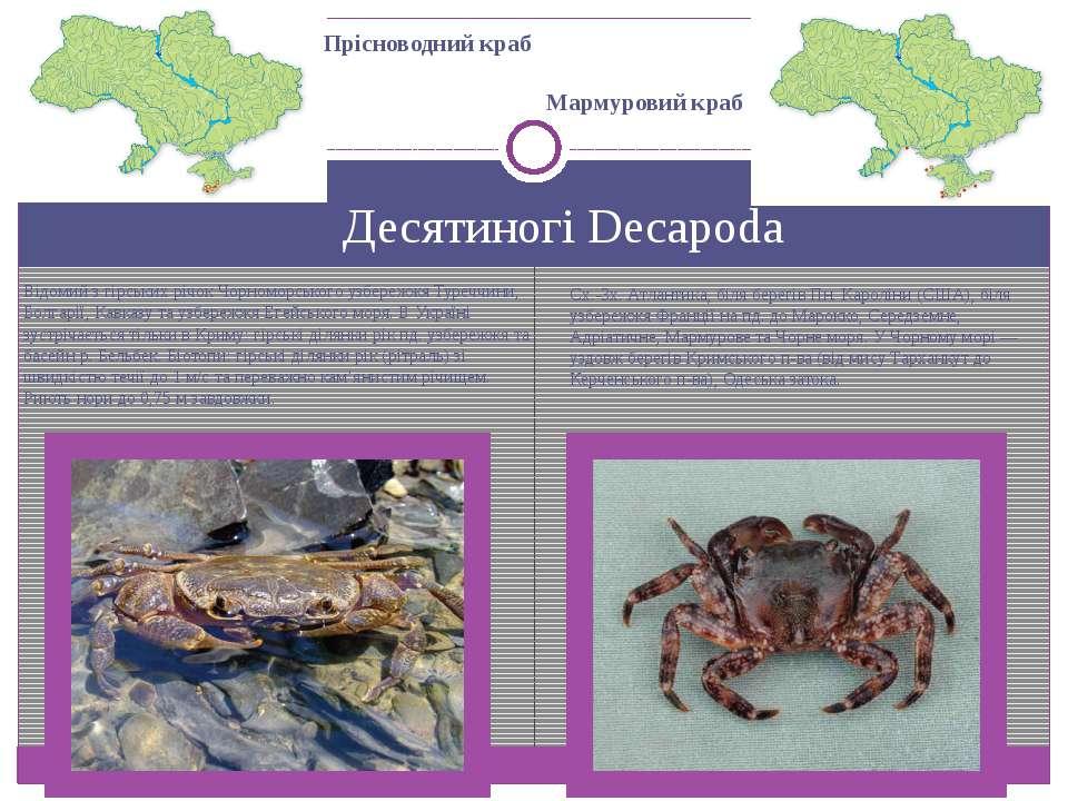 Десятиногі Decapoda Прісноводний краб Відомий з гірських річок Чорноморського...
