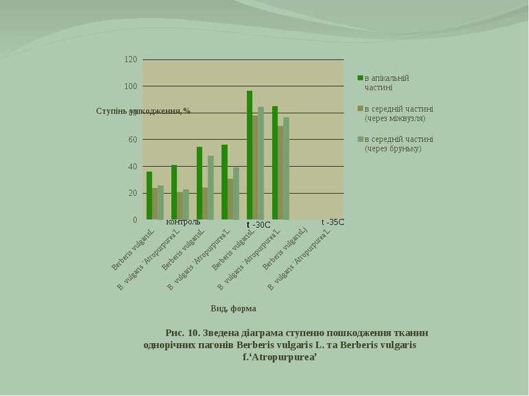 Рис. 10. Зведена діаграма ступеню пошкодження тканин однорічних пагонів Berbe...