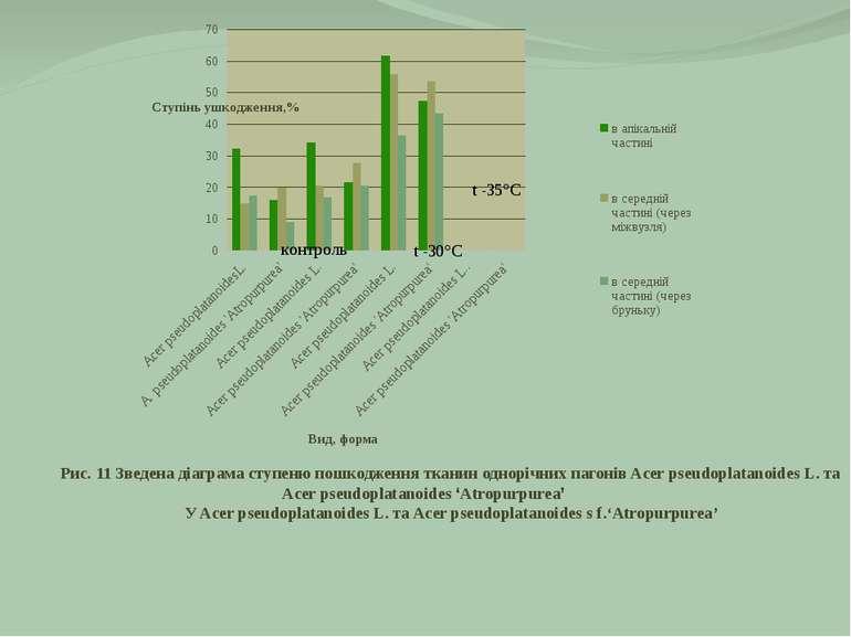 Рис. 11 Зведена діаграма ступеню пошкодження тканин однорічних пагонів Acer p...