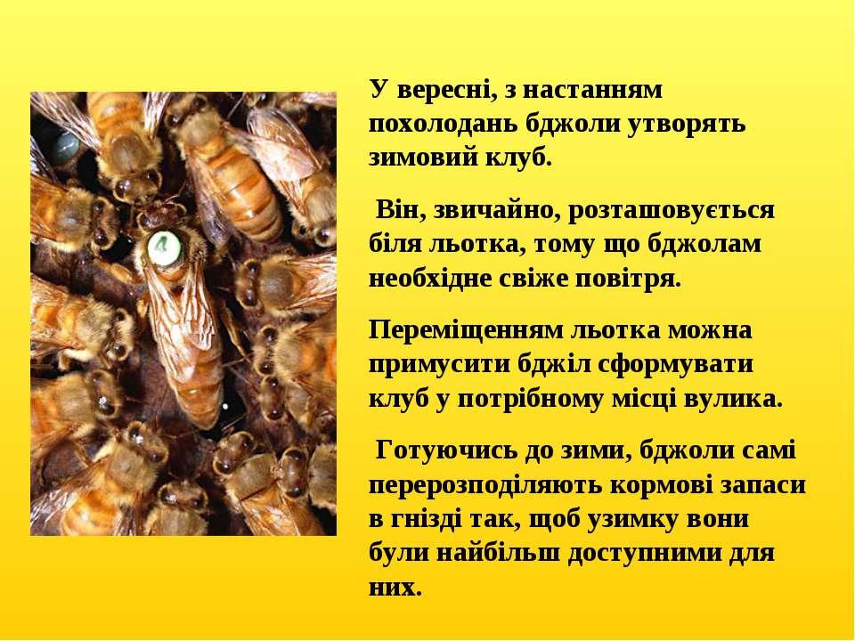 У вересні, з настанням похолодань бджоли утворять зимовий клуб. Він, звичайно...