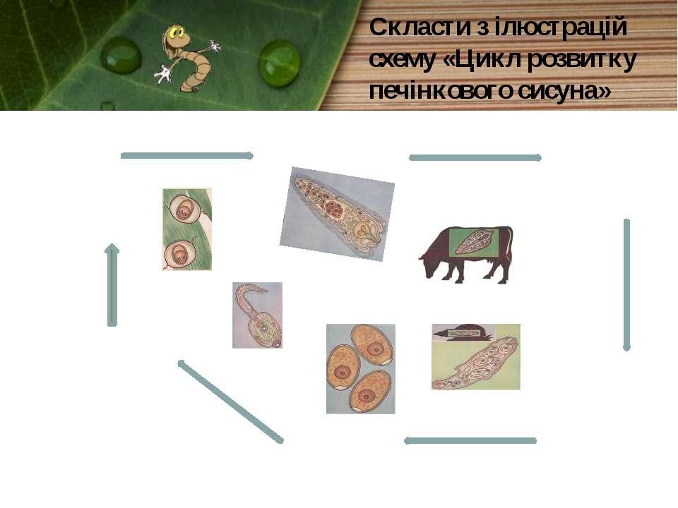 Скласти з ілюстрацій схему «Цикл розвитку печінкового сисуна»