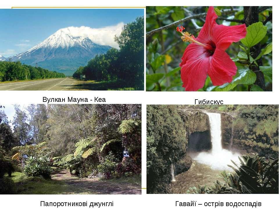 Вулкан Мауна - Кеа Гибискус Папоротникові джунглі Гавайї – острів водоспадів