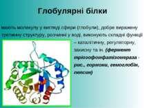 Глобулярні білки мають молекулу у вигляді сфери (глобули), добре виражену тре...