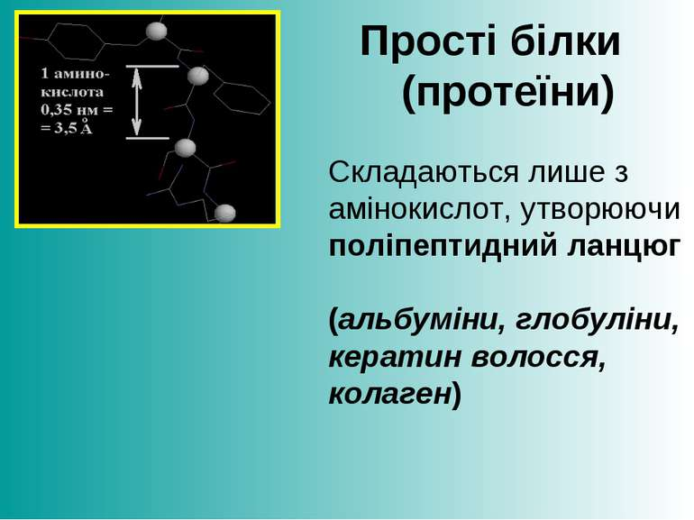 Прості білки (протеїни) Складаються лише з амінокислот, утворюючи поліпептидн...