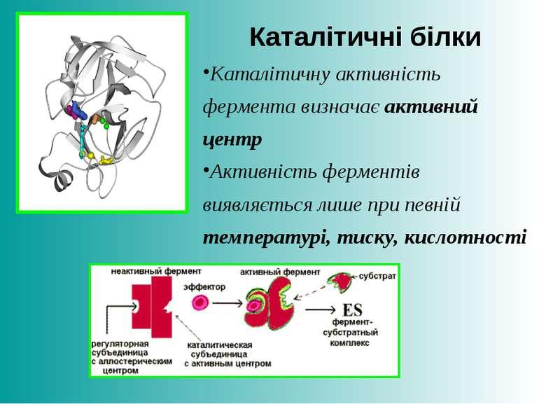 Каталітичні білки Каталітичну активність фермента визначає активний центр Акт...