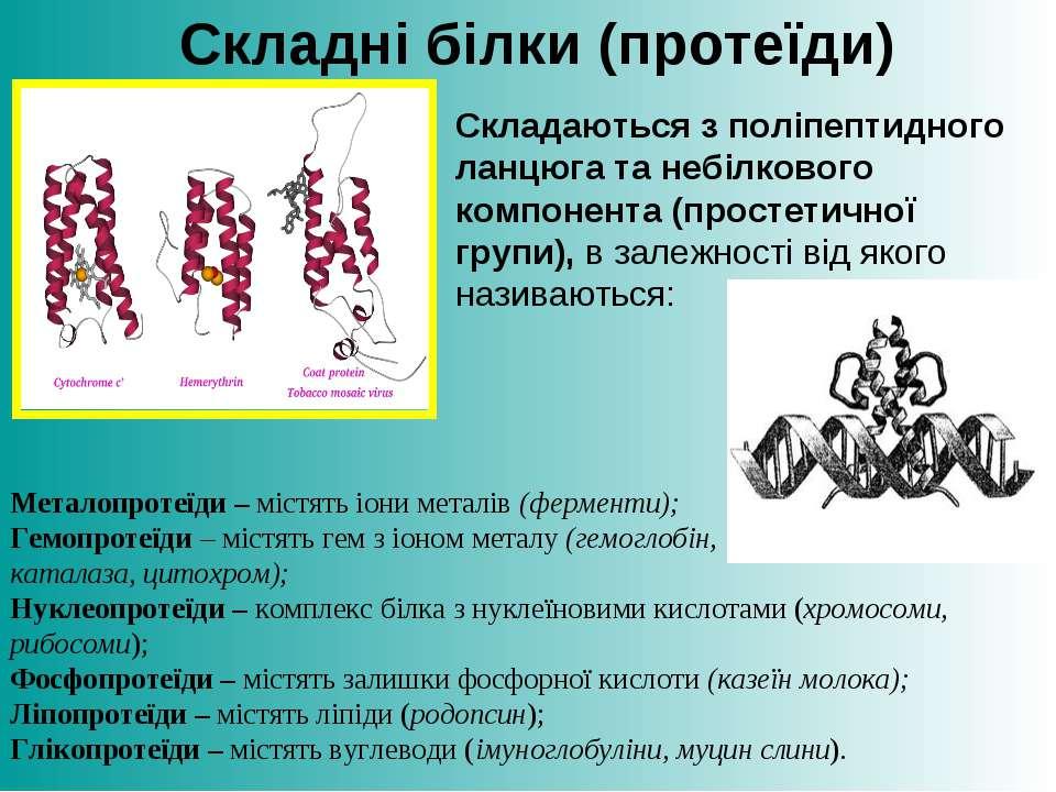 Складаються з поліпептидного ланцюга та небілкового компонента (простетичної ...