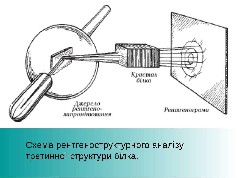Схема рентгеноструктурного аналізу третинної структури білка.