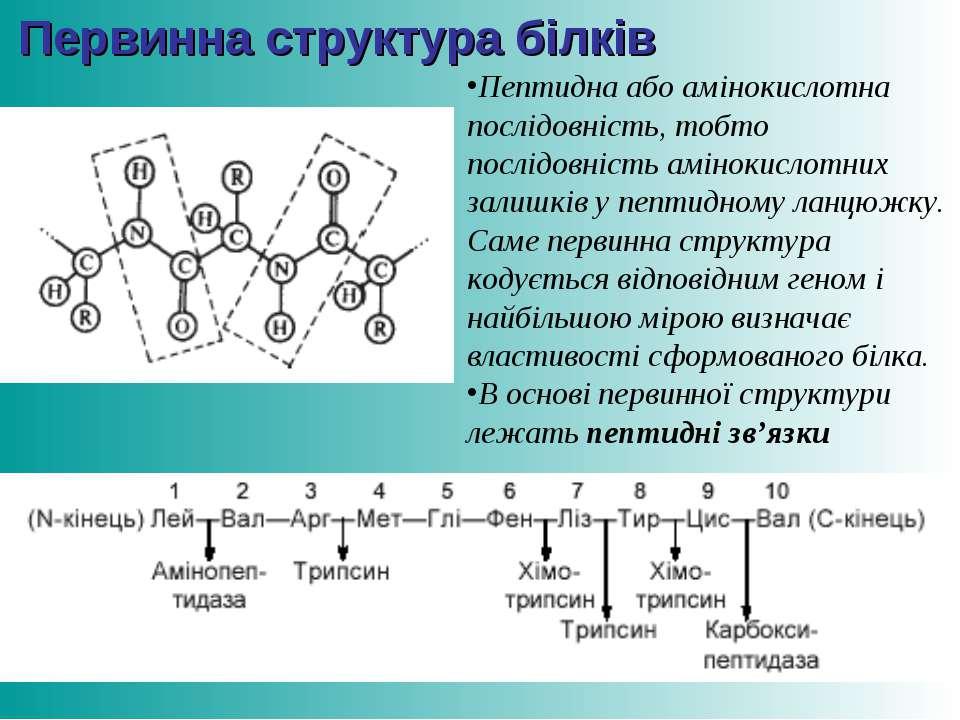 Первинна структура білків Пептидна або амінокислотна послідовність, тобто пос...