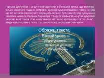 Пальма Джумейра - це штучний архіпелаг в Перській затоці, що включає кілька н...