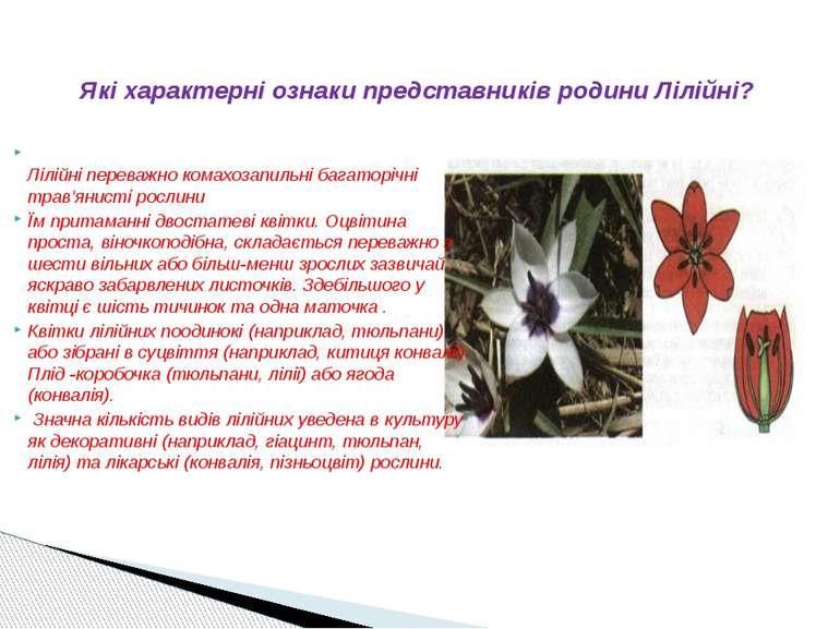Лілійні переважно комахозапильні багаторічні трав'янисті рослини Їм притаманн...
