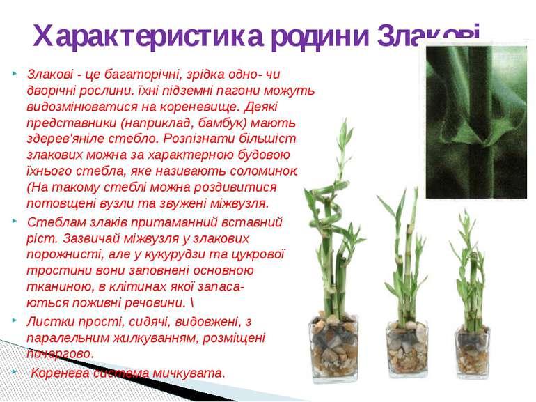 Злакові - це багаторічні, зрідка одно- чи дворічні рослини. їхні підземні паг...