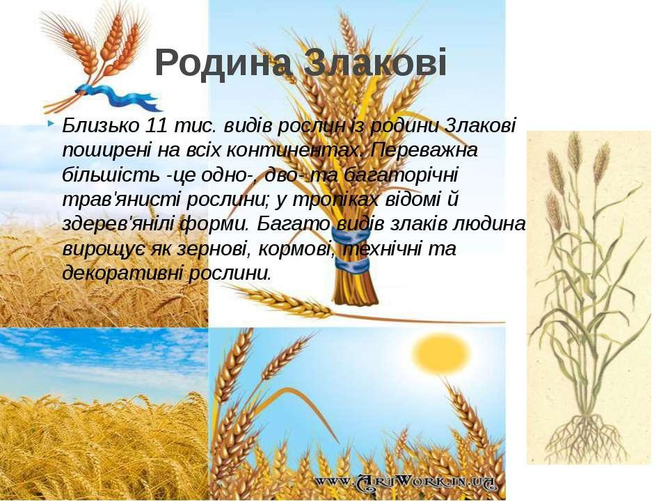 Близько 11 тис. видів рослин із родини Злакові поширені на всіх континентах. ...
