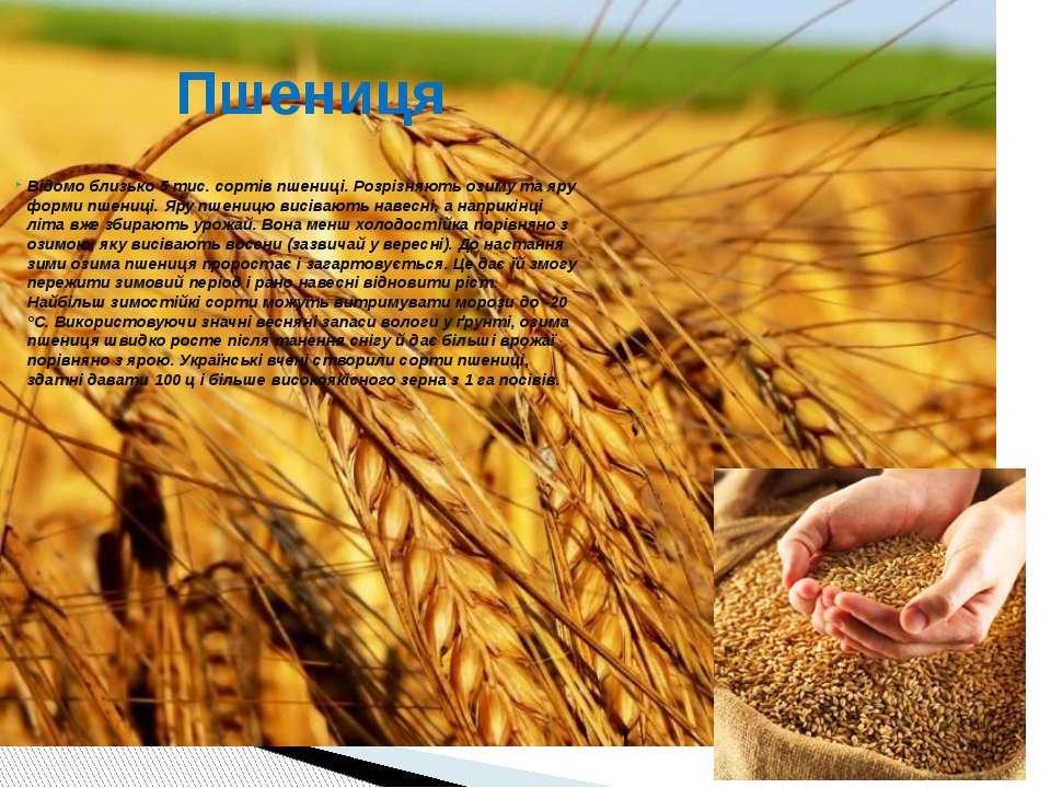 Відомо близько 5 тис. сортів пшениці. Розрізняють озиму та яру форми пшениці....