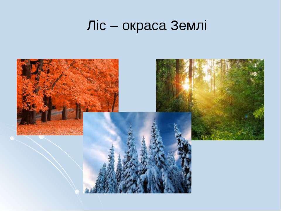 Ліс – окраса Землі