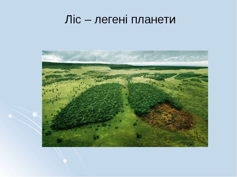 Ліс – легені планети
