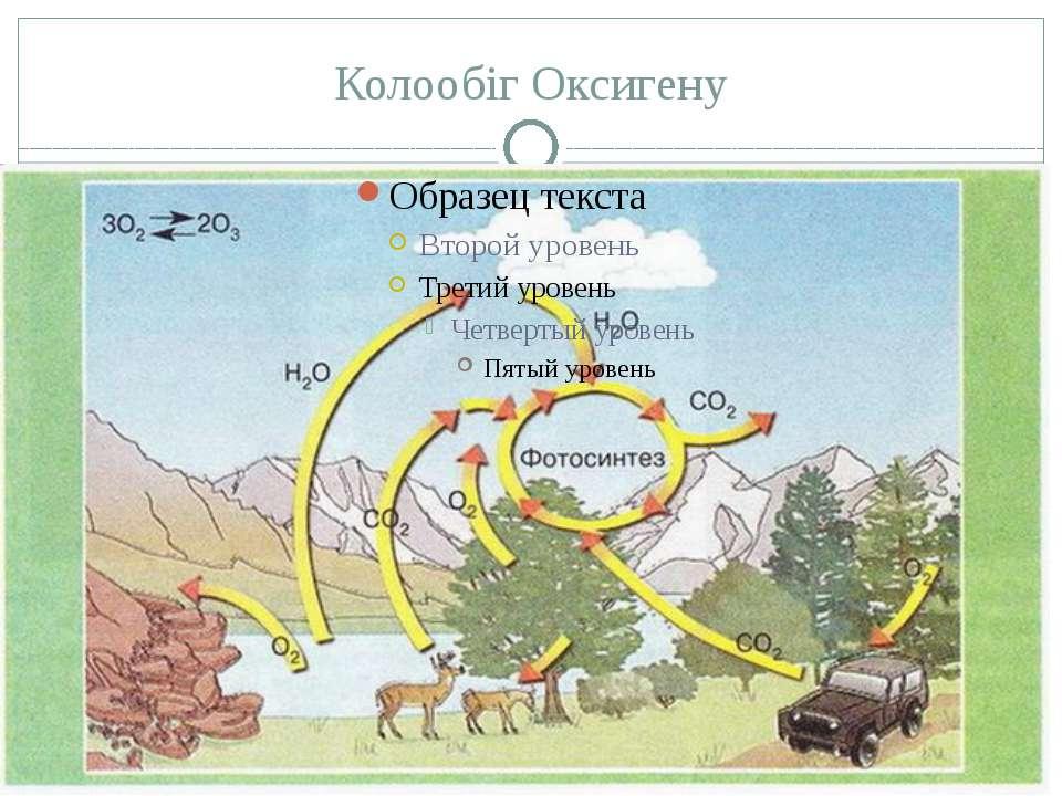 Колообіг Оксигену Оксиген утворюється внаслідок фотосинтезу, який здійснюютьз...